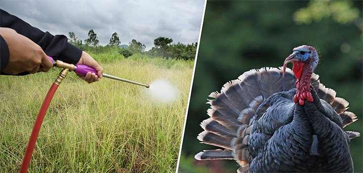 Bee-Killing Neonicotinoid Pesticides Found in Canadian Wild Turkeys