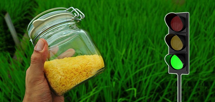 The FDA Has Approved GMO Golden Rice to Enter the U.S. Food Supply