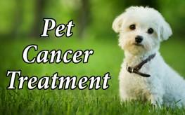 animal_dog_cancer