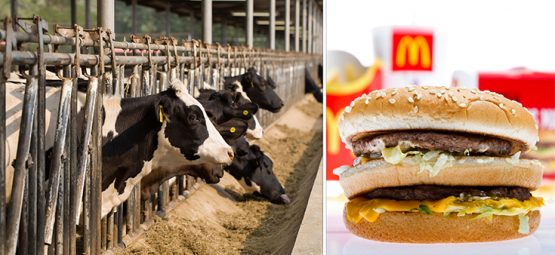 McDonald's Announces Key Plans to Curb Antibiotic Use in Beef Supply
