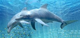 Fla. Everglades Dolphins Have the World's Highest Mercury Levels