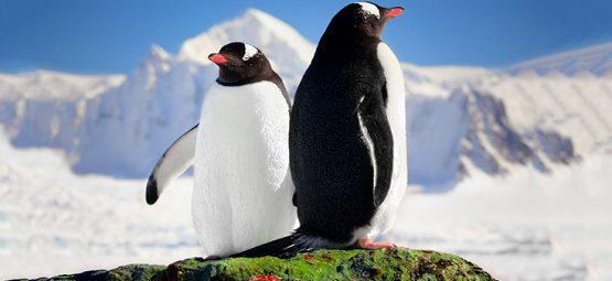 animals in antarctica