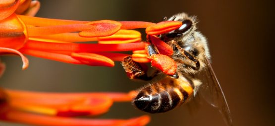 bee-pesticides-epa