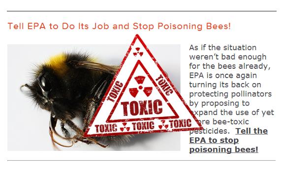 bee pesticides