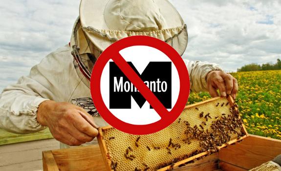 bees monsanto