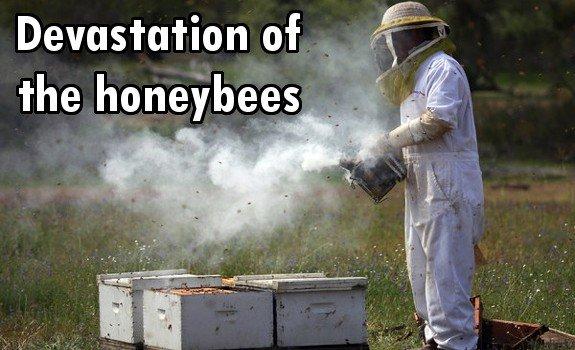 bee deaths