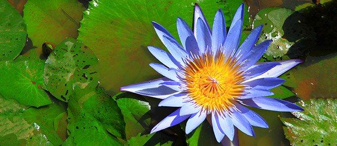blu-loto-fiore-680