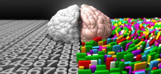 brain split