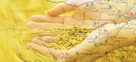 china-destroys-gmos