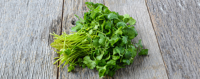 cilantro-herb-table-680