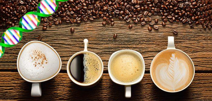 coffee, dna
