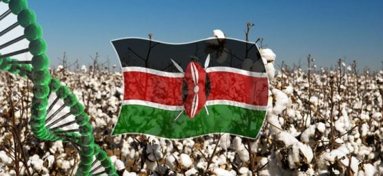Kenya cotton crop