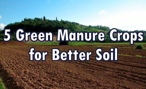 green manure crops
