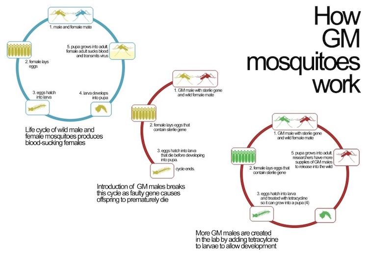 diagram-1024x717