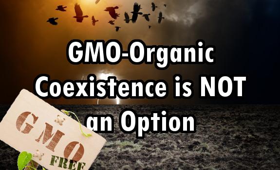 gmo organic coexistence