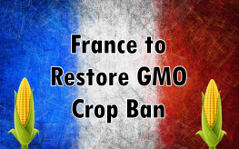 France gmo ban