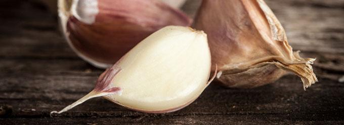 garlics-680