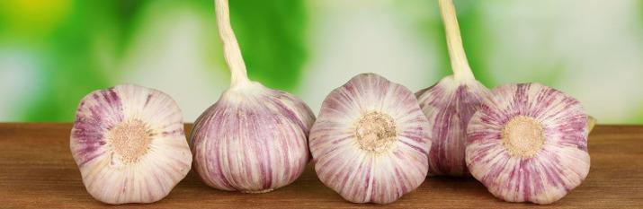garlics_bulbs_715_233