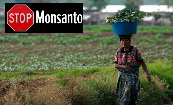 Guatemala GMO