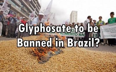 Brazil glyphosate