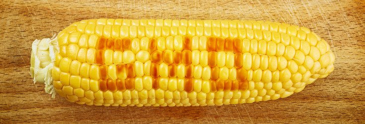 how to tell if corn is gmo