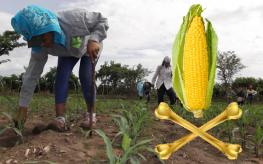 gmo crops El Salvador