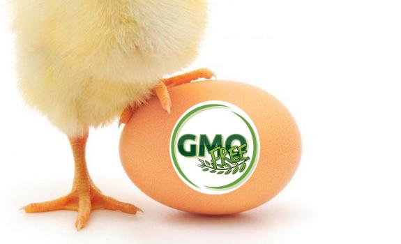 gmo free egg