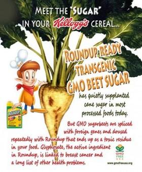 gmo_soda_sugar_beets