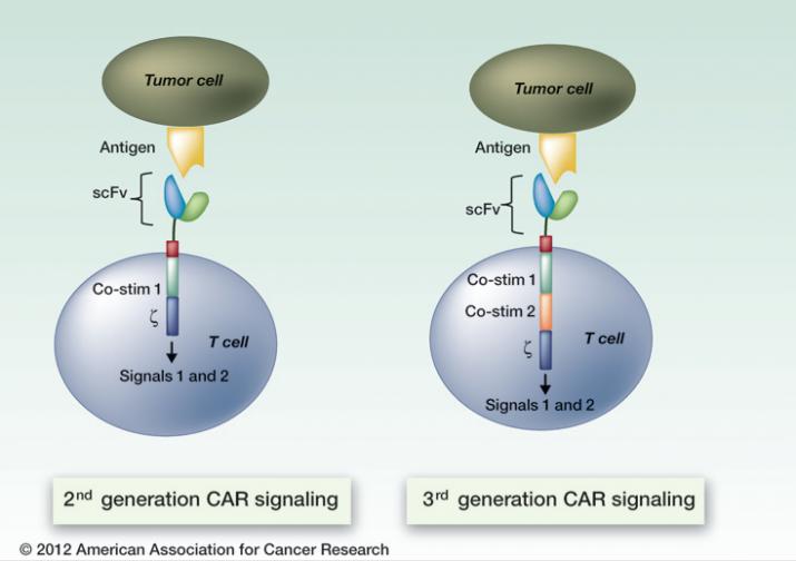 image-car-t-cells-enlarge