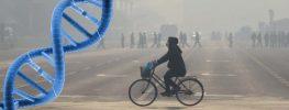 Genes for Antibiotic-Resistant Bacteria Are Found in Beijing Smog