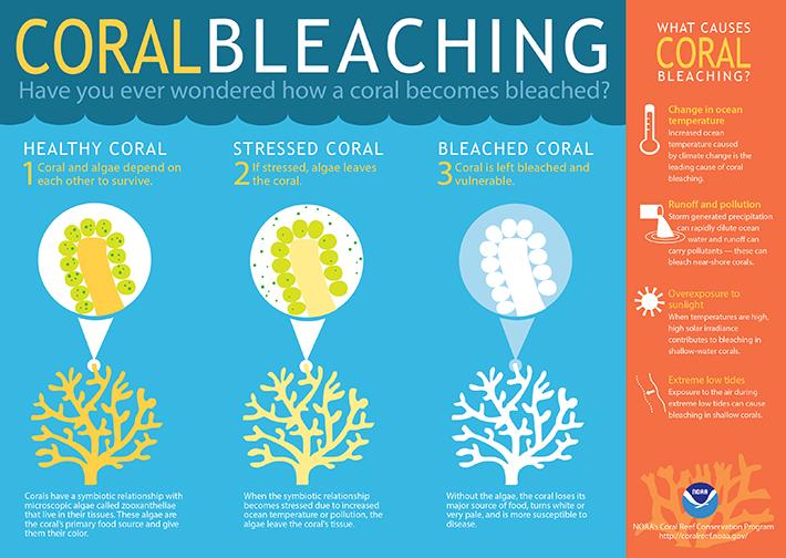 image-coralbleaching-large-710