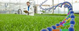 EPA Recommends Deregulating Highly Invasive GE Grass
