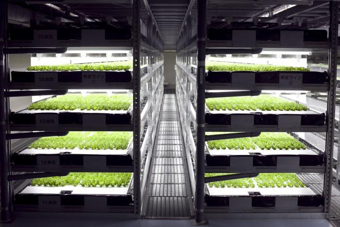 image-lettuce-hydro