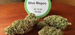 Marijuana Strain Recalled in Oregon over High Pesticide Levels
