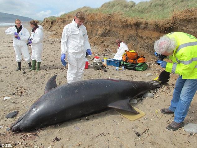 image-pcb-whales-extinction