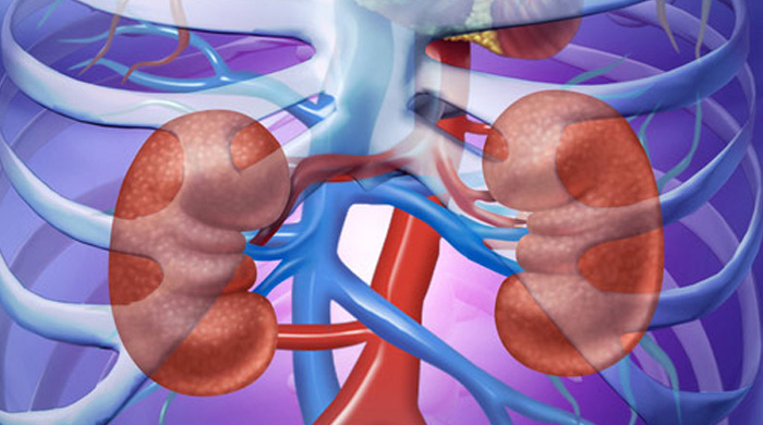 Kidney Cleanse  22 Foods For Kidney Health
