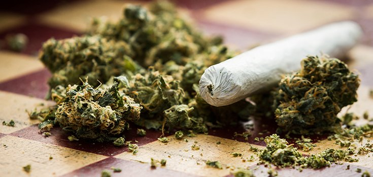 marijuana-buds-joint-735-350