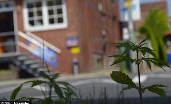 marijuana Germany