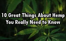marijuana_leaves_21