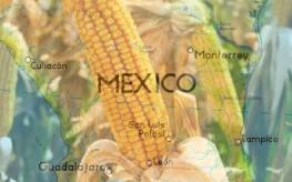 mexico-bans-gmo-corn