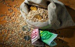 money crops