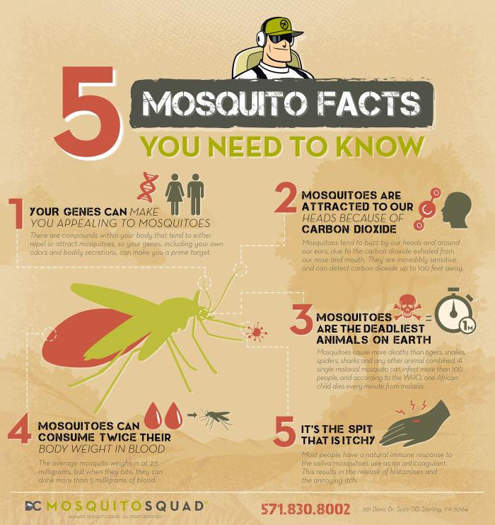 mosquitofacts