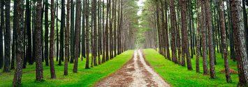 walking through nature