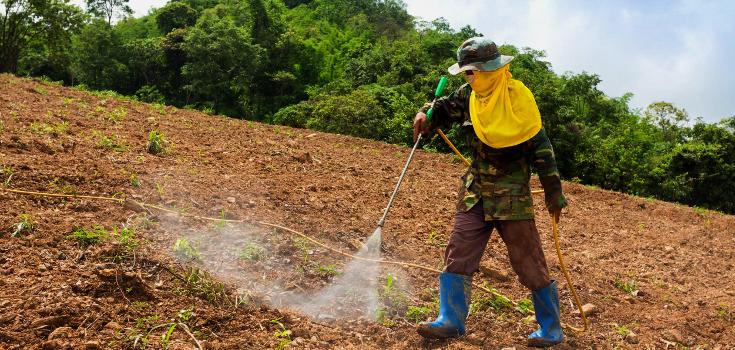 Brazil's Public Prosecutor Wants to Ban Monsanto's Chemicals