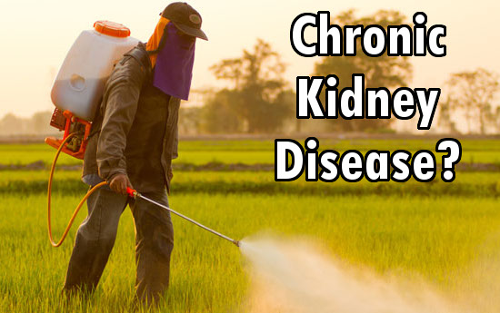 pesticides kidney diseaes