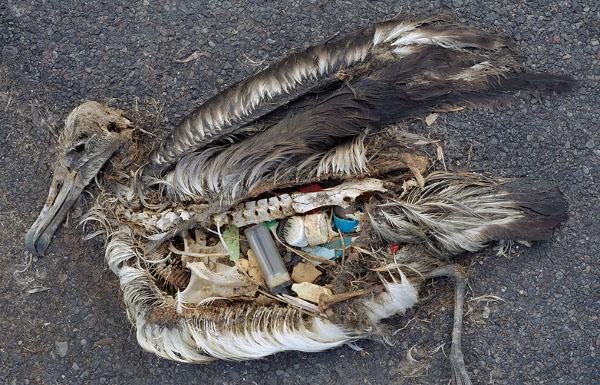 plastic_bird_pollution_scale
