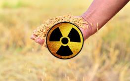 rice radiation