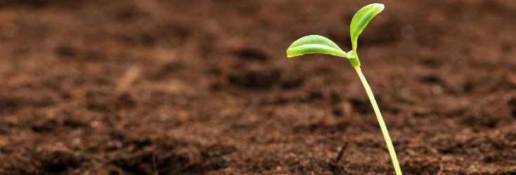 seed_sproutting