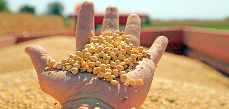 seeds_soybeans_735_350