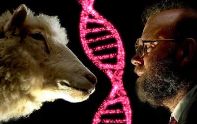 dolly, GMO animals